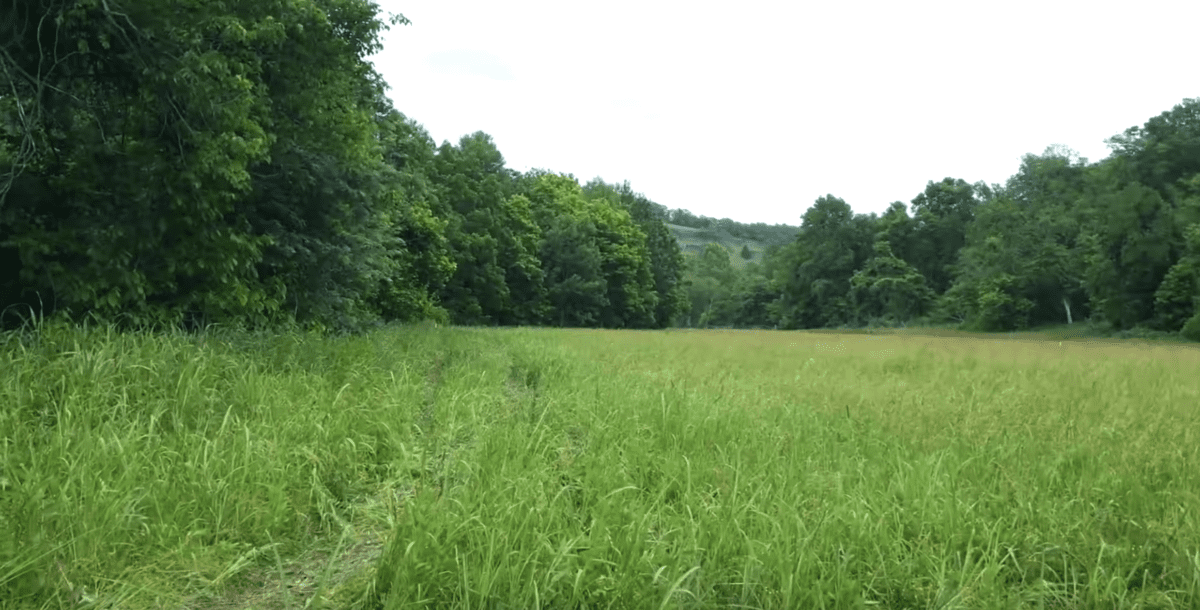 Lower field of the property.