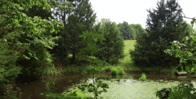 Small pond on the property.