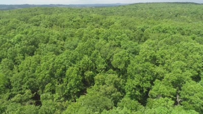 Big mature timber on this private tract.