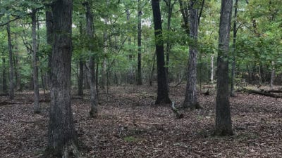 Large mature timber on this huge tract
