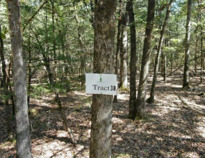 Tract 38 has a nice amount of mature timber