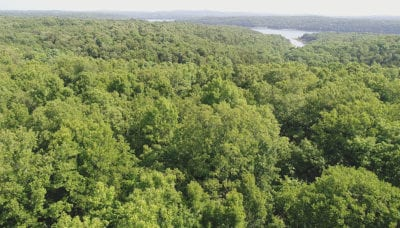Large amount of mature timber on this private tract