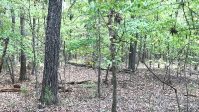 Nice mixture of timber on this large tract