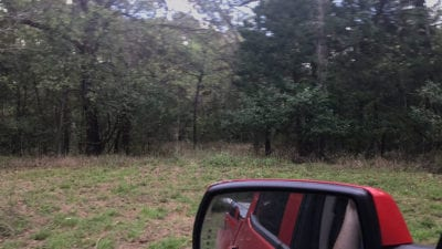 Open area on the south side of the property