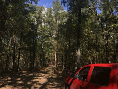 Tall timber on the property