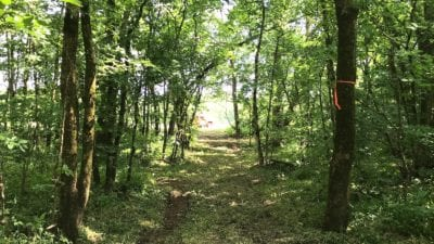 Trail which leads through the timber to the Finley River