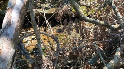 If these tree limbs were cleaned up it may uncover some really cool rock ledges on the property.