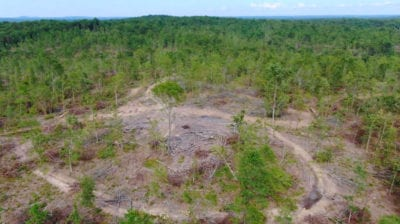 This large open area was probably used as a landing by the loggers to load their trucks.