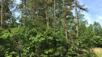 Many different types of trees on this large tract.