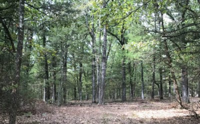 There are mature oak and cedar trees on this large tract.