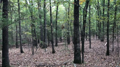 This tract has mature timber including oak hickory and cedar.