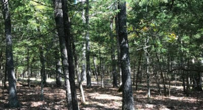 Numerous potential sites for building camping and hunting on this tract.