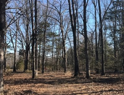 Excellent timber on this large tract.