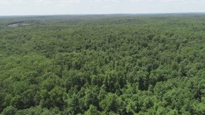 Aerial showing some of the mature timber on this large tract.