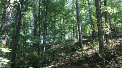 Hardwood trees on the property.