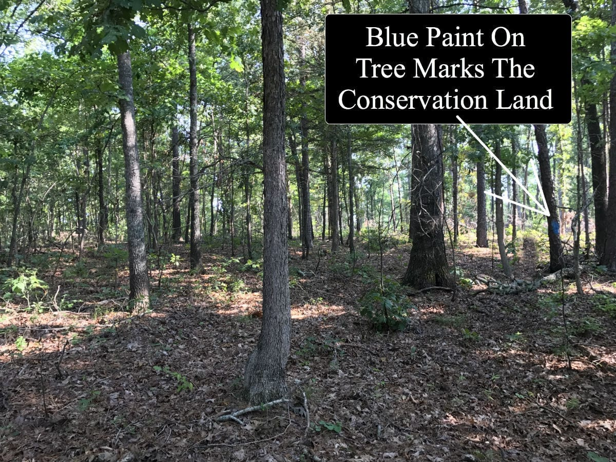 Standing on the east side of the property and looking toward the Conservation Land.